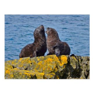Two Fur Seal Pups Postcard