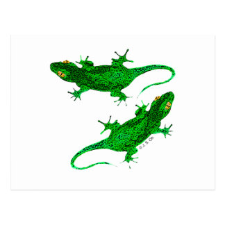 Two geckos postcard