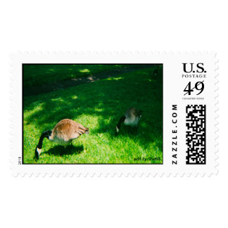 Two Geese Eating in the Park U.S. Postage Stamps