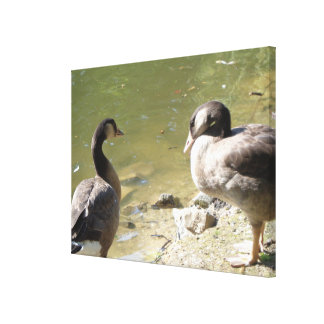 Two geese on the water canvas print