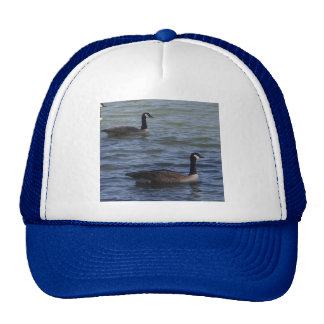 Two Geese Swimming Hat