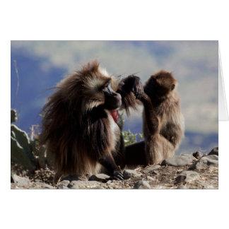 Two gelada baboons (Theropithecus gelada) Card