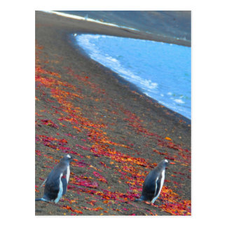 Two Gentoo Penguins at the Shore Postcard