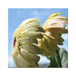 Two Gerbera Daisy Flowers Stretched Canvas Prints