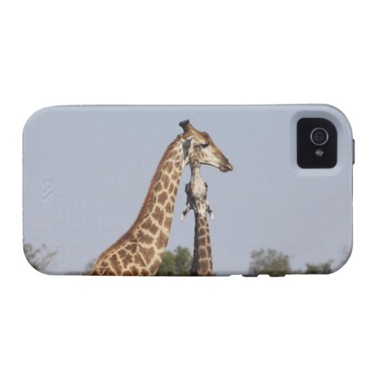 Two Giraffe,  Kruger National Park, South Africa Case-Mate iPhone 4 Case