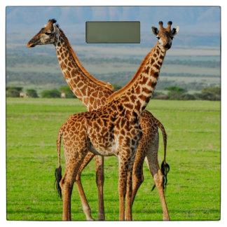 Two Giraffes Bathroom Scale