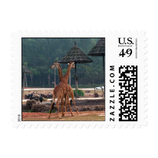 Two giraffes comforting each other in a zoo stamp