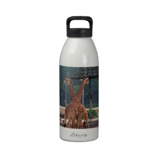 Two giraffes comforting each other in a zoo water bottle
