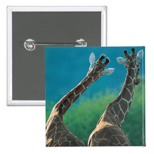 Two Giraffes (Giraffa camelopardalis) Button