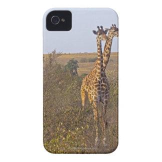 Two Giraffes (Giraffa camelopardalis), Masai iPhone 4 Case