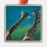 Two Giraffes (Giraffa camelopardalis) Christmas Tree Ornament