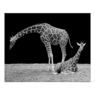 Two Giraffes in Black and White Print
