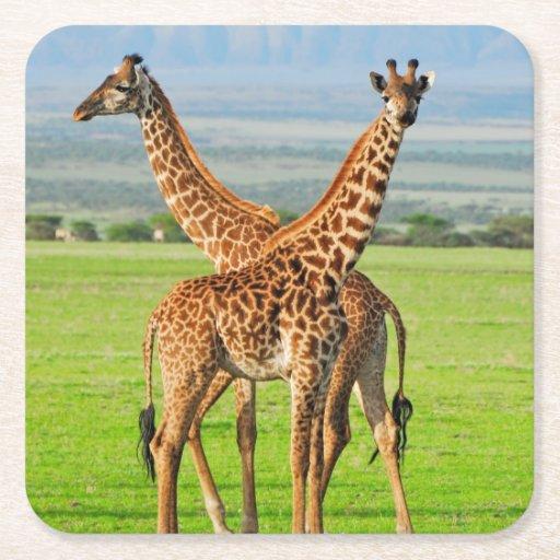 Two Giraffes Square Paper Coaster