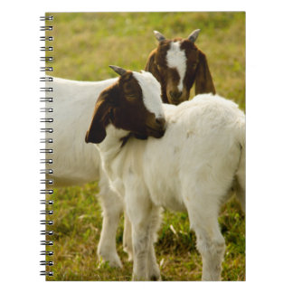 Two Goats Notebook