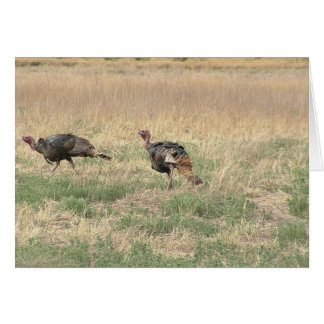 Two Gobblers Card