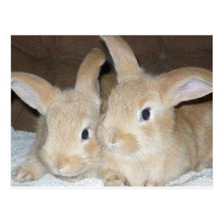 Two Golden Bunnies Postcard