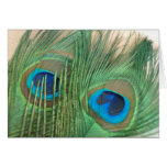 Two Golden Peacock Feathers Greeting Card