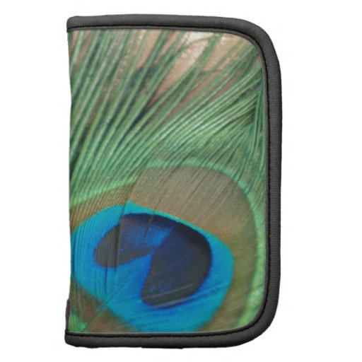 Two Golden Peacock Feathers Organizer