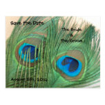 Two Golden Peacock Feathers Save the Date Post Card