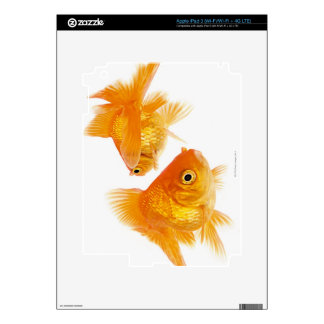 Two Goldfish Crossing Each Other Skins For iPad 3