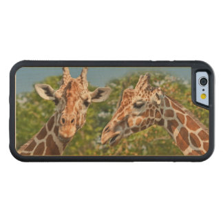 Two Gossiping Giraffes Carved® Maple iPhone 6 Bumper Case
