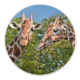 Two Gossiping Giraffes Ceramic Knob