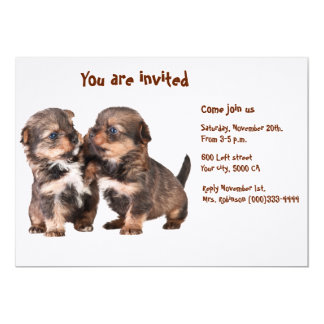 Two Graceful Yorkshire Puppies Card