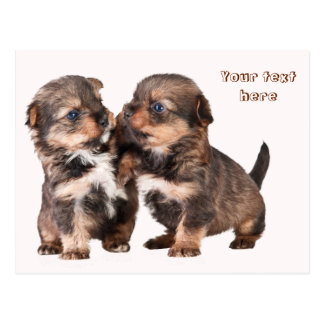 Two Graceful Yorkshire Puppies Postcard