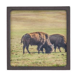 Two Grazing Buffaloes on The Range Keepsake Box