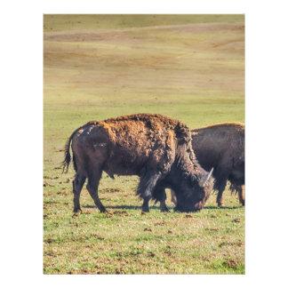Two Grazing Buffaloes on The Range Letterhead