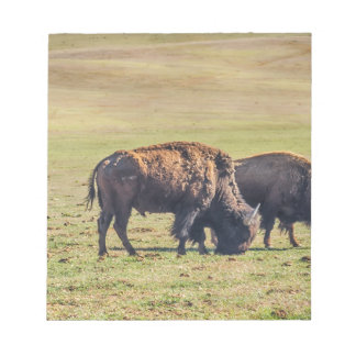 Two Grazing Buffaloes on The Range Note Pad