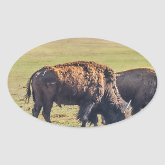 Two Grazing Buffaloes on The Range Oval Sticker