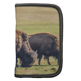 Two Grazing Buffaloes on The Range Folio Planner