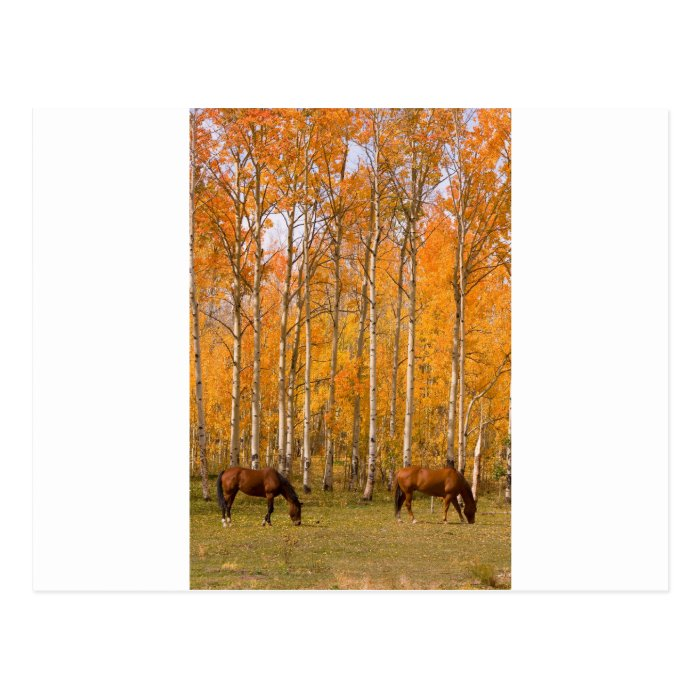 Two Grazing Horses In the Autumn Postcard