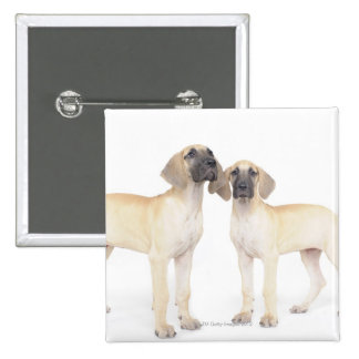 Two Great Danes Pinback Button