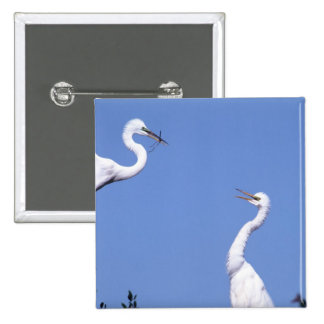 Two Great Egrets (Ardea alba) in a courtship 2 Inch Square Button