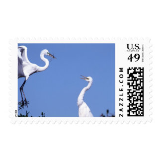 Two Great Egrets (Ardea alba) in a courtship Stamp