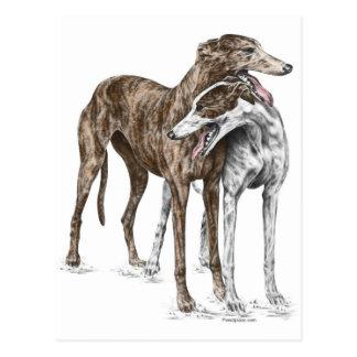 Two Greyhound Friends Dog Art Postcard
