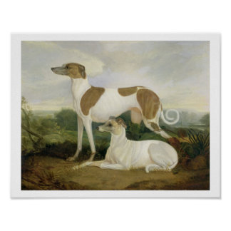 Two Greyhounds in a Landscape (oil on canvas) Poster