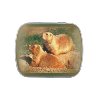 Two Groundhogs Coming Out On Groundhogs Day Candy Tin