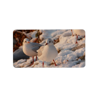 two gulls in the snow label