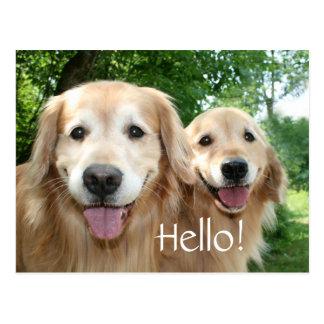 Two Happy Golden Retriever Dogs Outside Postcard