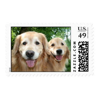 Two Happy Golden Retrievers Outside Postage