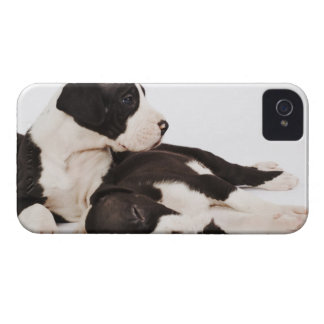 Two Harlequin Great Dane puppies on white Case-Mate iPhone 4 Case