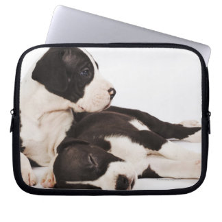 Two Harlequin Great Dane puppies on white Computer Sleeve