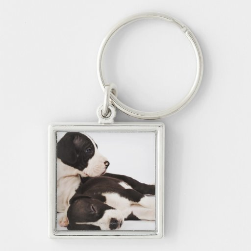 Two Harlequin Great Dane puppies on white Key Chain