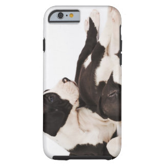 Two Harlequin Great Dane puppies on white Tough iPhone 6 Case
