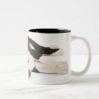 Two Harlequin Great Dane puppies on white Two-Tone Coffee Mug