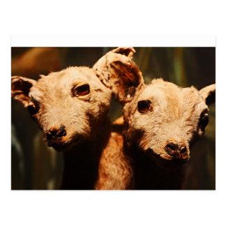 Two-Headed Goat Postcard