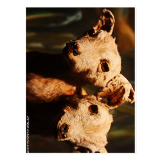 Two-Headed Goat Postcard